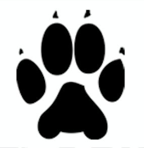 wolff paw video