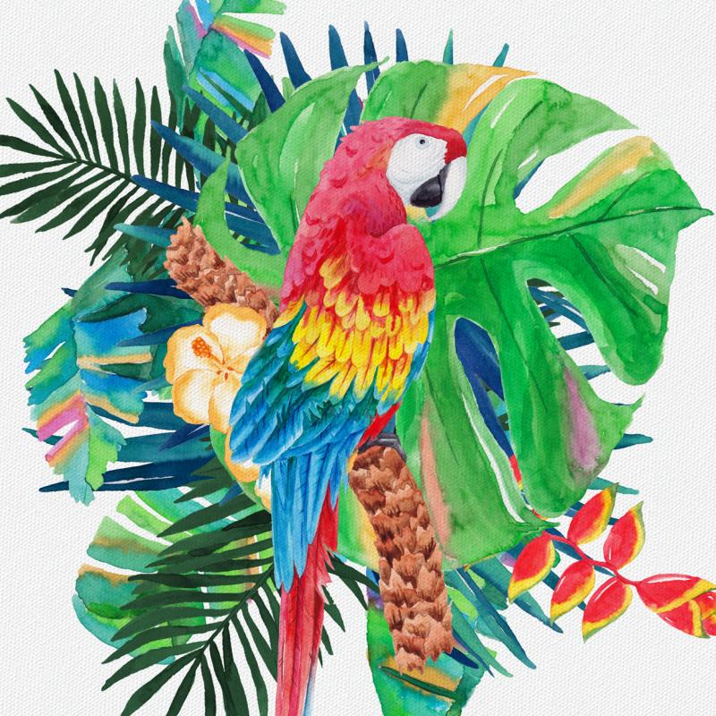 Maven Macaw Events